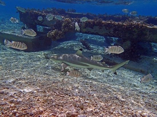 Le Sauvage Private Island: Black Tip