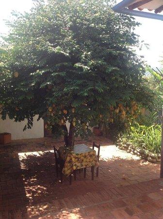 El Carambolo: Tree