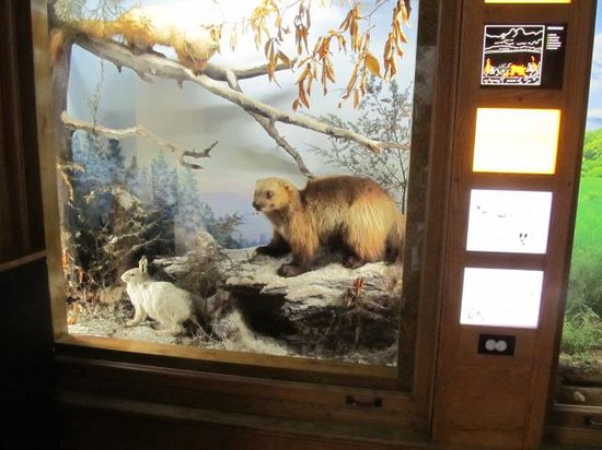 Buffalo Museum of Science: Wild life