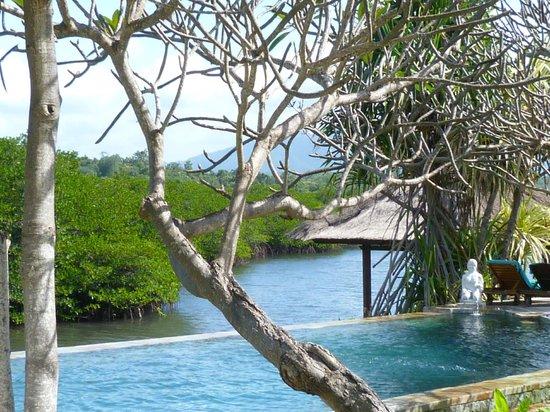 Mimpi Resort Menjangan: piscine et mangrove