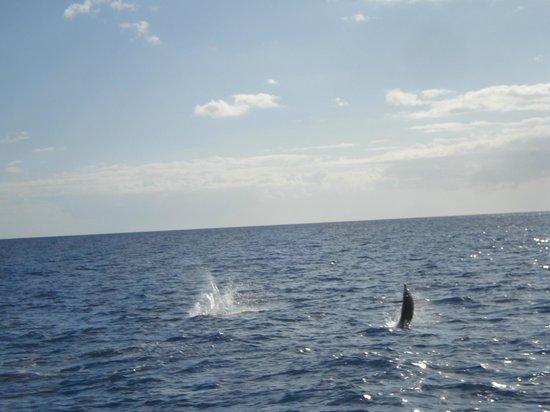 Ocean Joy Cruises: Spinner dolphins