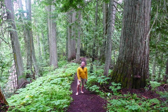 Island Lake Lodge : a three minute walk from the lodge and you are in with the giant cedars!