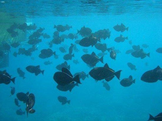 Lahaina Snuba: Fishies
