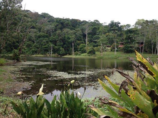 Maquenque Eco-Lodge: Lake of the lodge