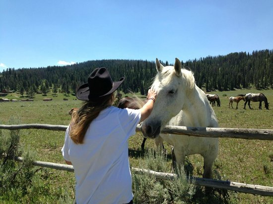 Nine Quarter Circle Ranch: Making friends