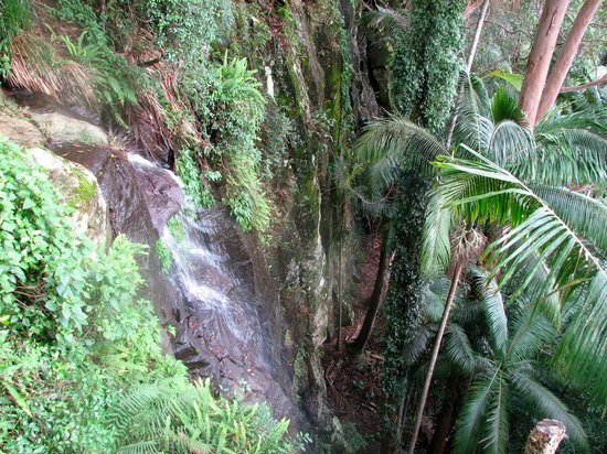 Witches Falls Cottages: witches falls walk