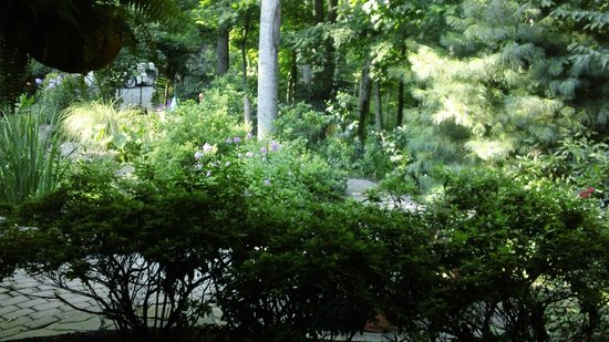 Lazy Bear Lodge: Garden