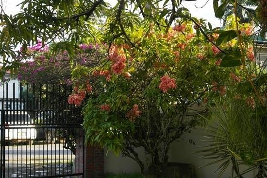 Cardy Apartments: Flowers at Cardy