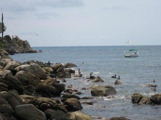 Banderas Scuba Republic: seashore by 2nd dive
