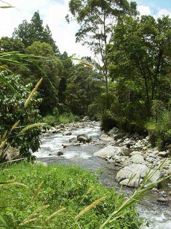 Rambala Jungle Lodge: stream