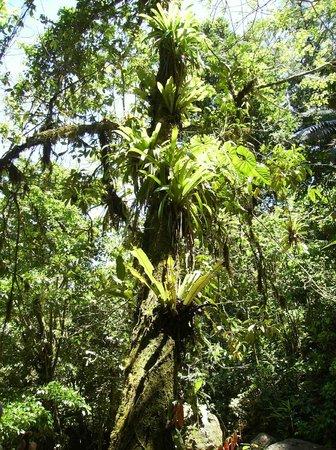 Rambala Jungle Lodge: bromeliads