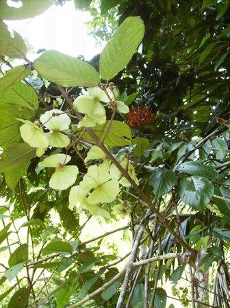 Rambala Jungle Lodge: flora