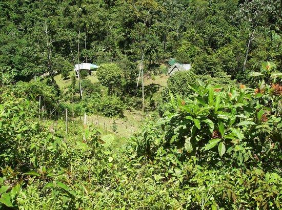 Rambala Jungle Lodge: rambala lodge area