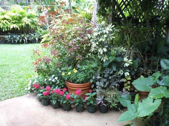 Aloha Lani Inn : Backyard Patio Lanai