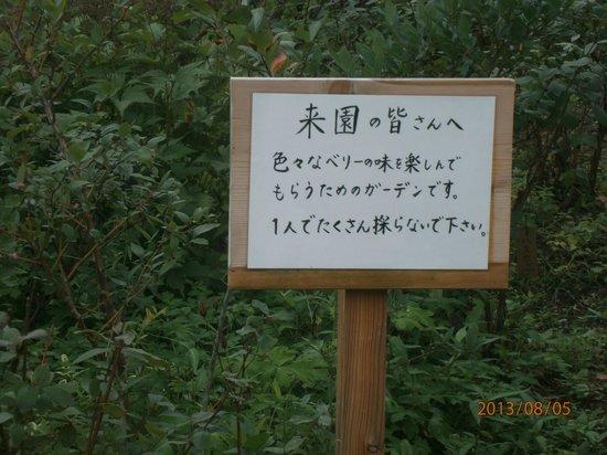 Kantenpapa Garden : ブルーベリーがあります