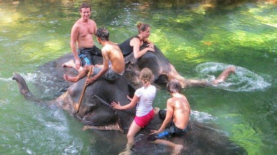Ban Chang Thai - Elephant Camp: baignade