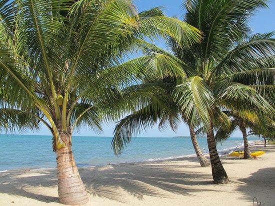 Turtle Inn: Even more palms