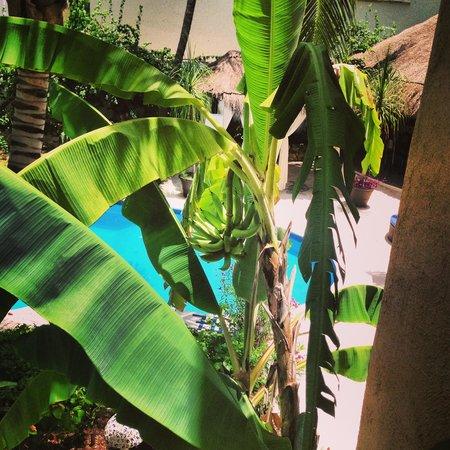 BRIC Hotel & Spa: room view