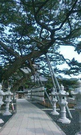 Tanjoji : 松と灯篭