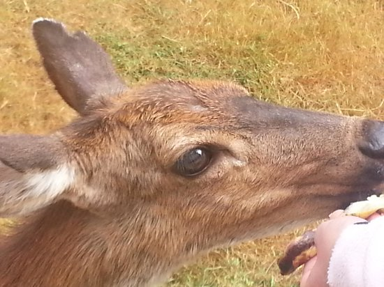 Powder Creek Ranch Bed and Breakfast : Feeding deer was a one of a kind experience. Not required but interesting.