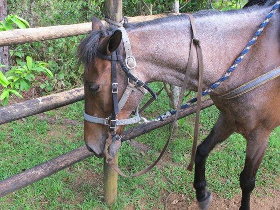 Blancaneaux Lodge: stables