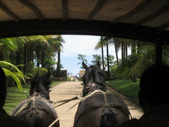 Blancaneaux Lodge: horse drawn carriage ride to airstrip