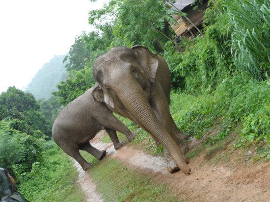 Boon Lott's Elephant Sanctuary: Boon Lotts