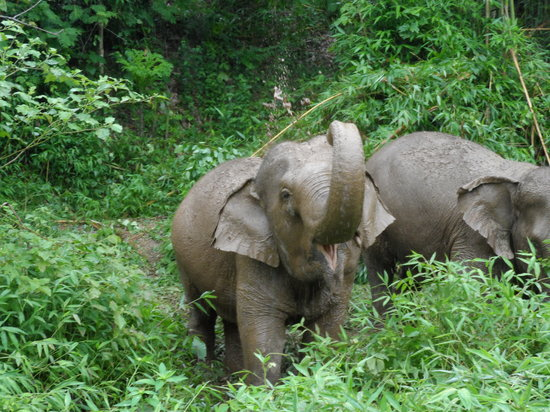 Boon Lott's Elephant Sanctuary : Boon Lotts