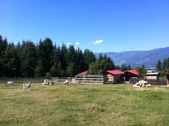 Swiss Lodge B&B: The goats' heaven!
