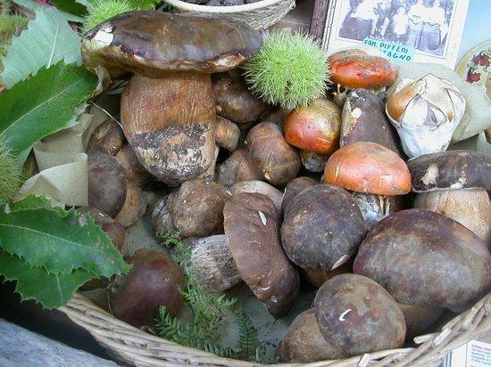 Регион Муджелло, Италия: Funghi porcini
