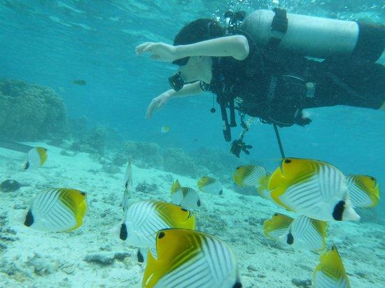 The Dive Centre - The Big Fish: Lagoon dive
