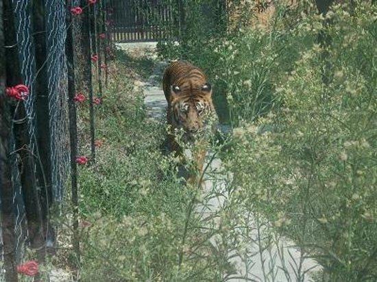 Civitella Casanova, Italië: Zoo La Rupe