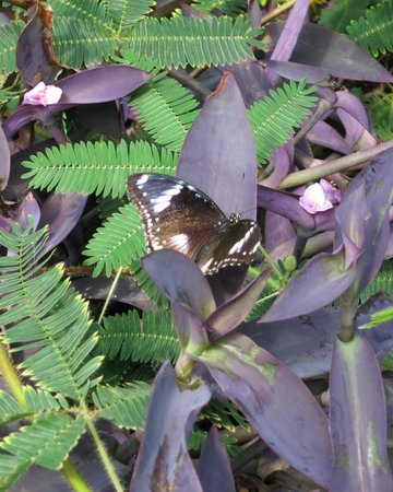 Victoria Butterfly Gardens: You can get right up close to them!