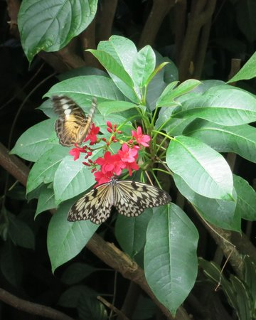 Victoria Butterfly Gardens: Butterflies all around