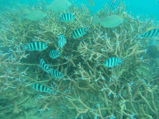 Aore Island Resort: A group of beautifully coloured tropical fish in waist deep water !