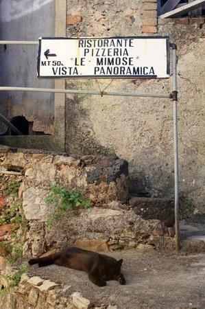 Le Mimose di Falanga e Santamaria: Указатель)
