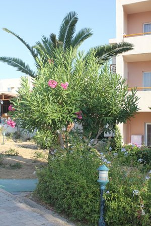 Hotel Delfina Beach: appartements et jardins