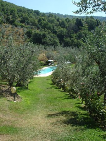 Podere Casarotta: Walk down to the pool