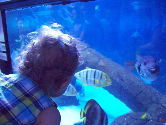 Looking at fish in the big tank picture of aquarium of for Fishing in boise idaho