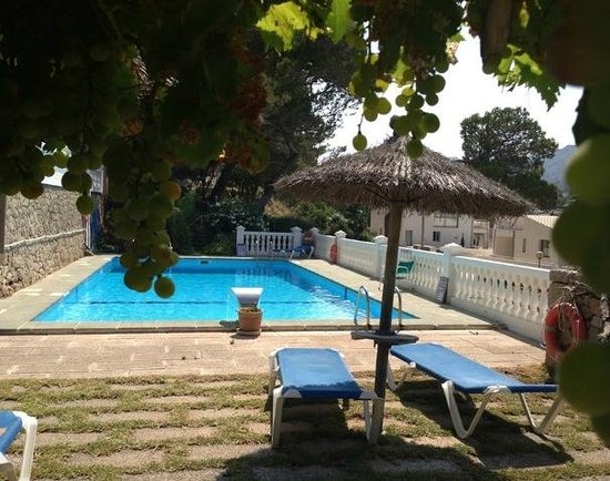 Hostal Los Pinos: Pool view from beneath the shady vines