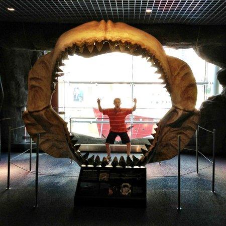 Inside Aquarium Picture Of National Aquarium Baltimore