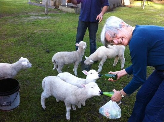 Margaret River Hideaway & Farmstay: Early morning feeding the babies
