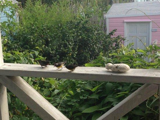 Cocobay Resort: uccellini ovunque