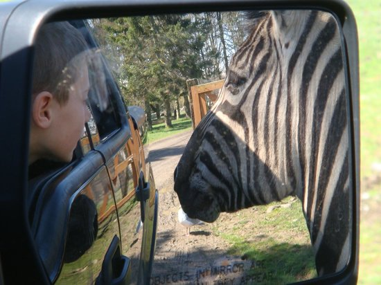 Olympic Game Farm: Just a little closer....