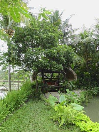 Omah Apik: Jardin