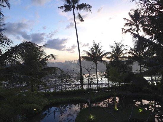 Omah Apik: Jardin au coucher du soleil