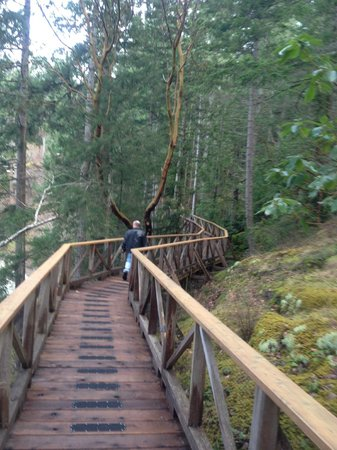 Rockwater Secret Cove Resort: walkway through the trees