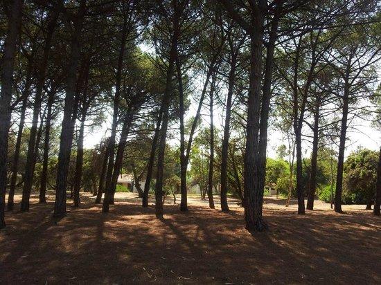 Baia degli Achei Village - TH Resorts: La Pineta