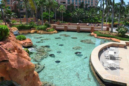 Atlantis - Harborside Resort: Sting Rays near The Dig