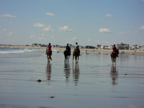 Atlantic Breeze Suites Horses On The Beach At Low Tide